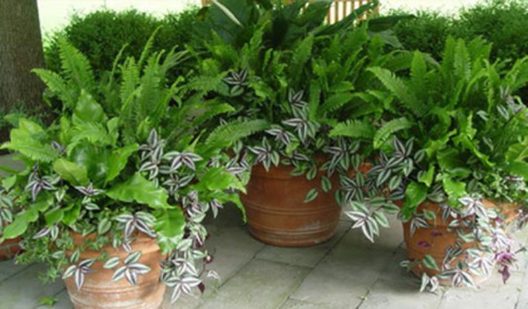 Jardinage: comment préparer ses plantes aux vacances?