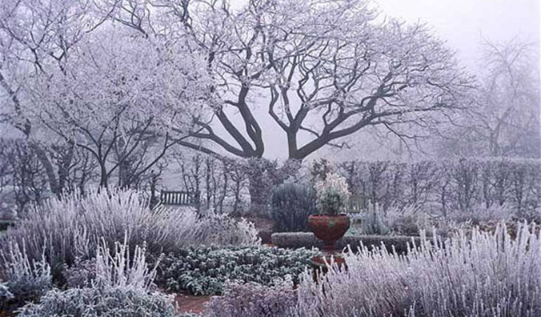 Comment protéger son jardin en hiver?