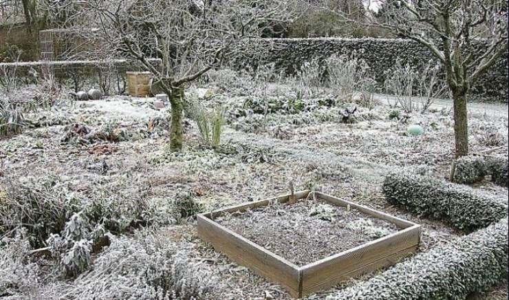 Neige et jardin : comment protéger ses plantes ?