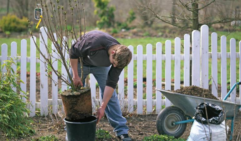 Que faut-il planter à l'automne dans son jardin?