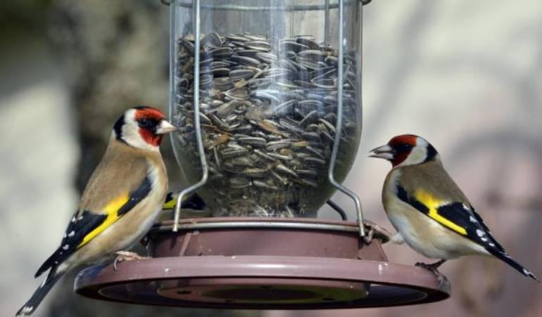 Comment nourrir les oiseaux de son jardin ?